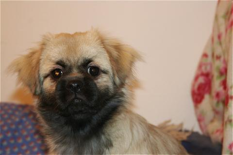 Chalu vom Dach der Welt 5 Monate alt