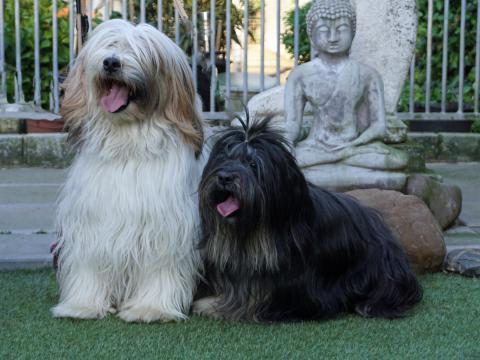 Toby und Yuma