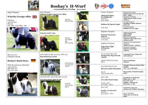 Boshay's H-Wurf Ahnentafel der Welpen