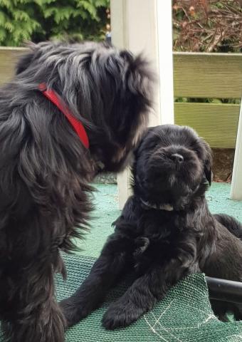 13 Wochen alter Welpe spielt mit 6 Wochen altem Baby