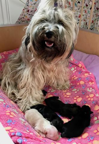 Mayla und ihre Babys