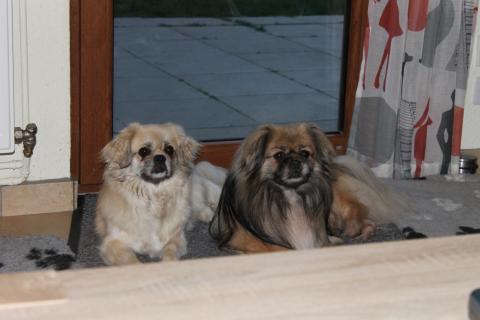 Zelda und Ibbo