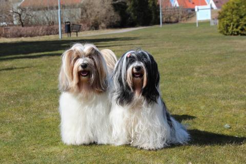Boshay's L-Wurf, die Eltern ♥️