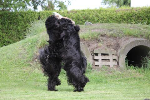 """Tibet Terrier Geschwister """"Jampa"""" und """"Sara"""" beim Dogdance!"""