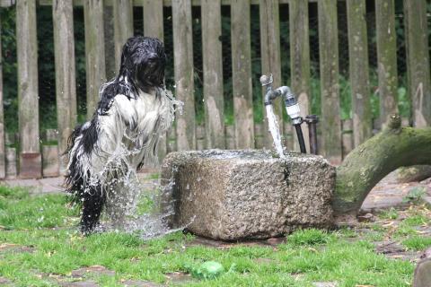 Ni-co liebt Wasser