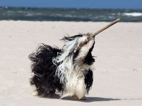 Im-chi hat Spaß am Strand von Sylt