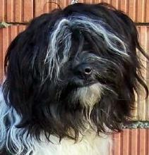Wanted Nice Dog's Ketu Ka-Dag Lamleh