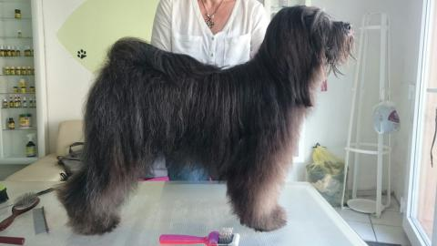 Beim Hundefriseur