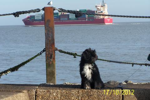 Tibet Terrier Marley mit 6 Monaten hinaus in die weite Welt