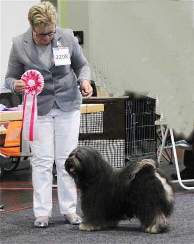 Tibet Terrier Rüde Marley Sangpo von Shan Changbai Internationale Ausstellung Bremen 2017