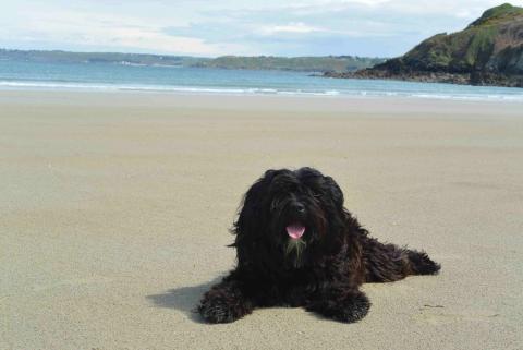 Nom-pa genießt eine Auszeit nach dem Spielen  am Strand
