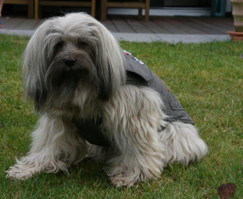 Tibet Terrier Hündin Shantirak Achandra 17 Jahre