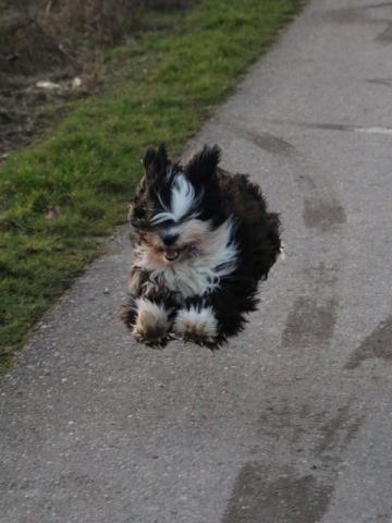 Lisha fliegt ins 2. Lebensjahr!