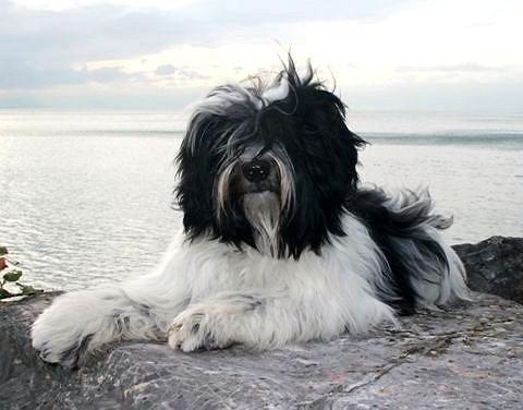 Nimo der Berghund