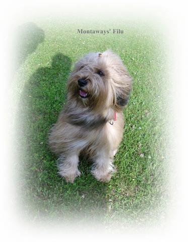 Montaways' Filu, fast 4 Jahre