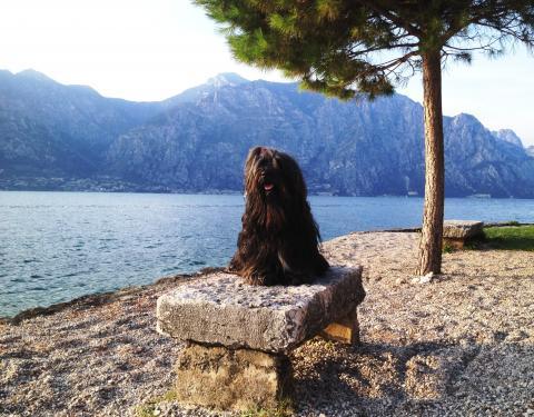 Ti La Shu Born to be Magic (Tiger) unterwegs am Gardasee