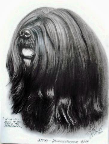 "KTR Jahressieger 2011 Tibet Terrier Rüde ""Ti La Shu Born to be Magic for Shambavara"""