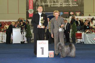 Tibet Terrier Hündin Tri-Va-Ten Anagarika Taro bester Veteran BS-Dortmund 2011