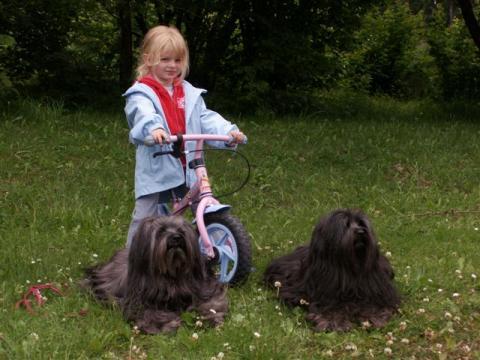 Tibet Terrier Hündin Tri-Va-Ten Anagarika Taro (links) mit Tochter Bumo u. Enkelin v. Birgit Speer