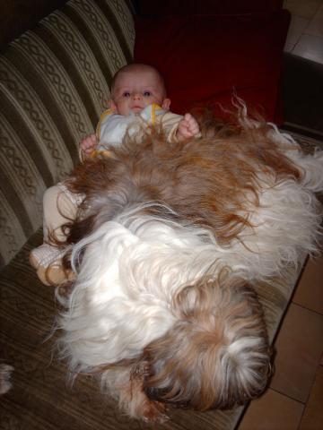 Tibet Terrier Hündin Smyonpa khangpa Adjungdjogo yagpo paßt aufs Baby auf