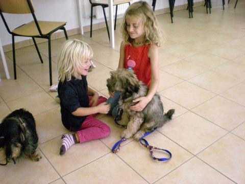 Tibet Terrier Hündin Nan-dari Lamleh von Nama-schu/ geht jetzt in den Hundeschulkindergarten