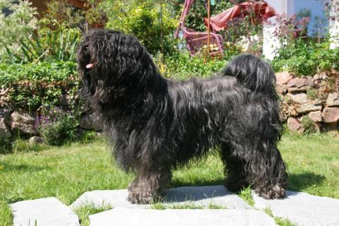 Tibet Terrier Chihosang U'Jo-Wo zu Hause im Garten