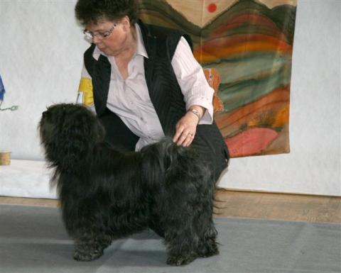 Tibete Terrier Chihosang U'Jowo in Grasellenbach 04-2012