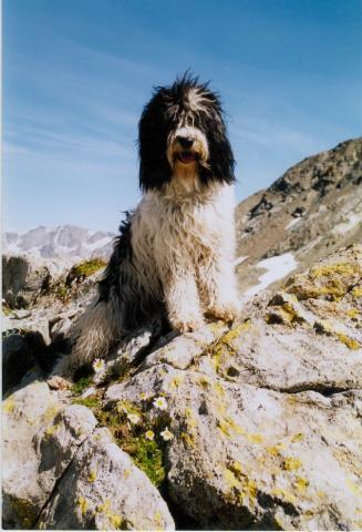 Tibet Terrier Dun-Thong Batida in den Bergen 2001