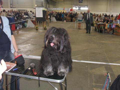 Ausstellung Berlin 2011, Tibet Terrier