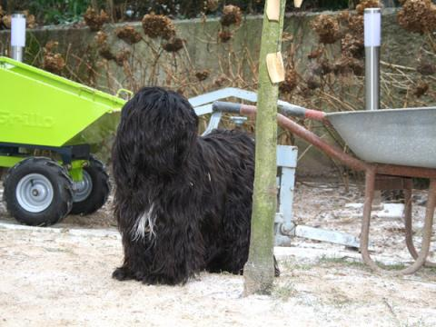 Wanted Nice Dog's Jya-Ki-Ma Ndaya