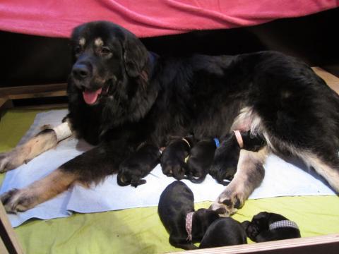 Mama Bala Bhuti Beautyful Aranka aka Balani mit 7 Babies