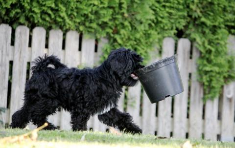 Schimi hilft auch gerne bei der Gartenarbeit