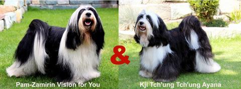 Tibet Terrier Welpen_Peter Künzel_Oelde_NRW_E-Wurf of Dog's Wisdom