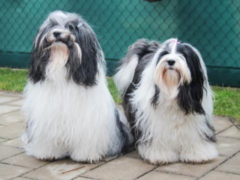 Die Eltern: Khyi-Mi Bod-ja Lamleh und Lam Drog denpa Ajala Im-chi♥