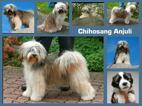 Mutter des Wurfes:  Chihosang Anjuli