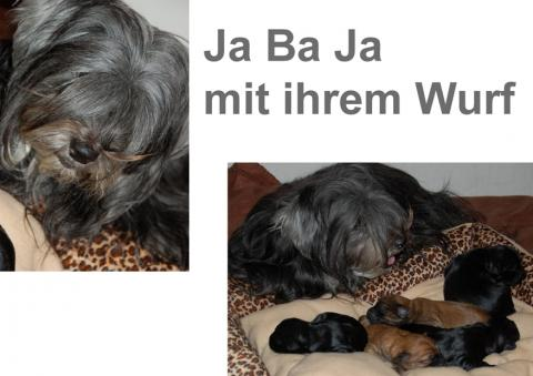 Ja Ba Ja mit ihrem Wurf (1 Woche alt)
