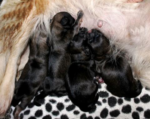 kurz nach der Geburt der zobelfarbenen Mädchen