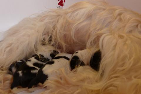 Das Kleeblatt kuschelt sich an Mamas Bauch