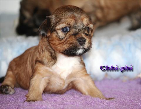 Chhi-phi die Kleinste mit 4 Wochen