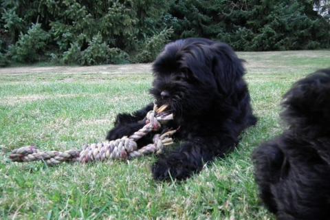 Tibi-Baby mit Spielzeug