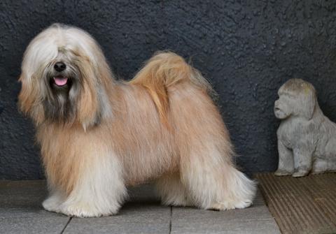Der Rüde Wanted Nice Dog's Fuzu Lamleh