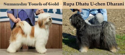 Eltern Rupa Dhatu E-Wurf