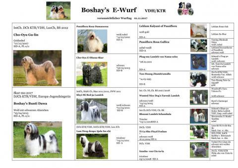 Stammbaum E-Wurf Boshay's Tibet Terrier
