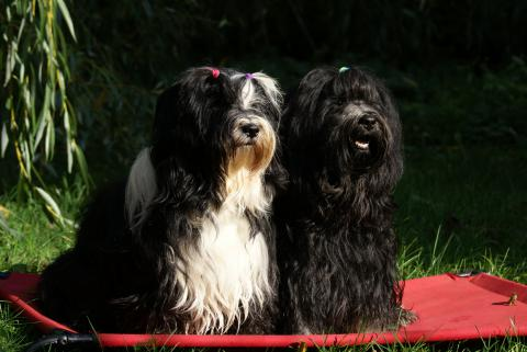 Hochzeitsbild Lisha und Yeshi