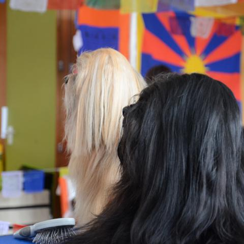 Lhasa Apso Profilbild